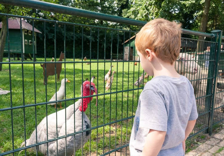 Thanksgiving facts about wild turkeys