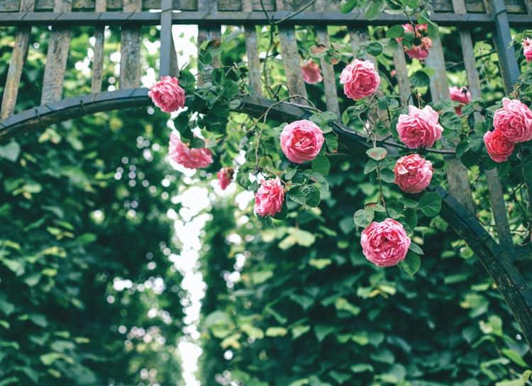 rose garden in portland oregon