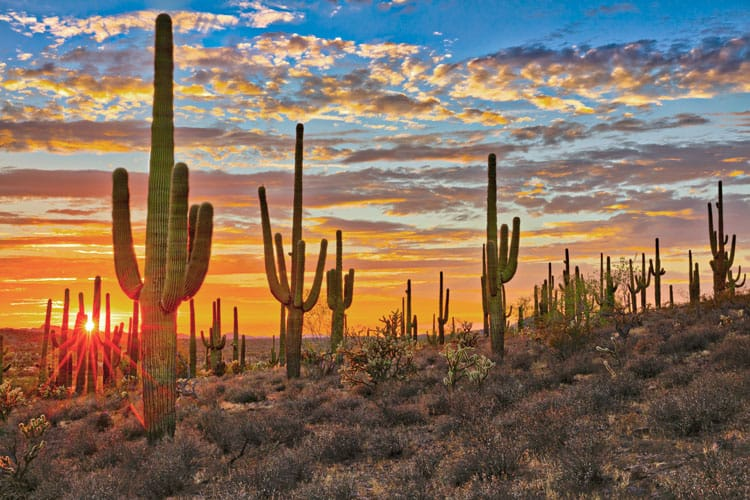 phoenix arizona desert landscape with saguaros