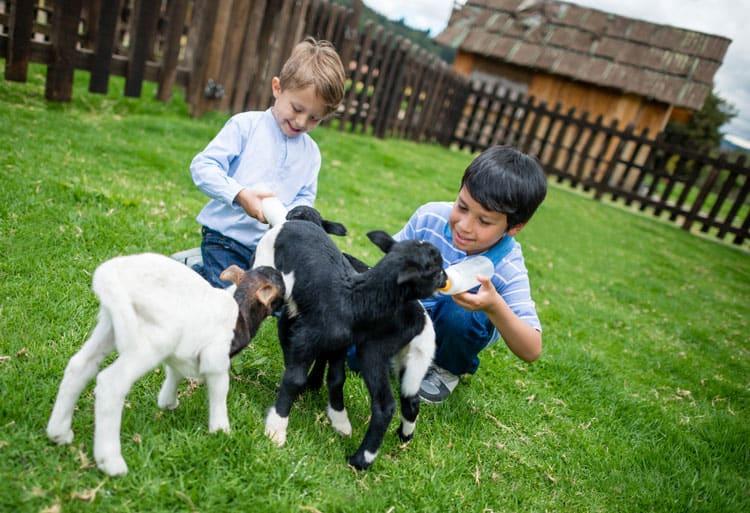 boys petting goats